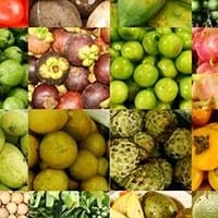 fruits_200px_opt